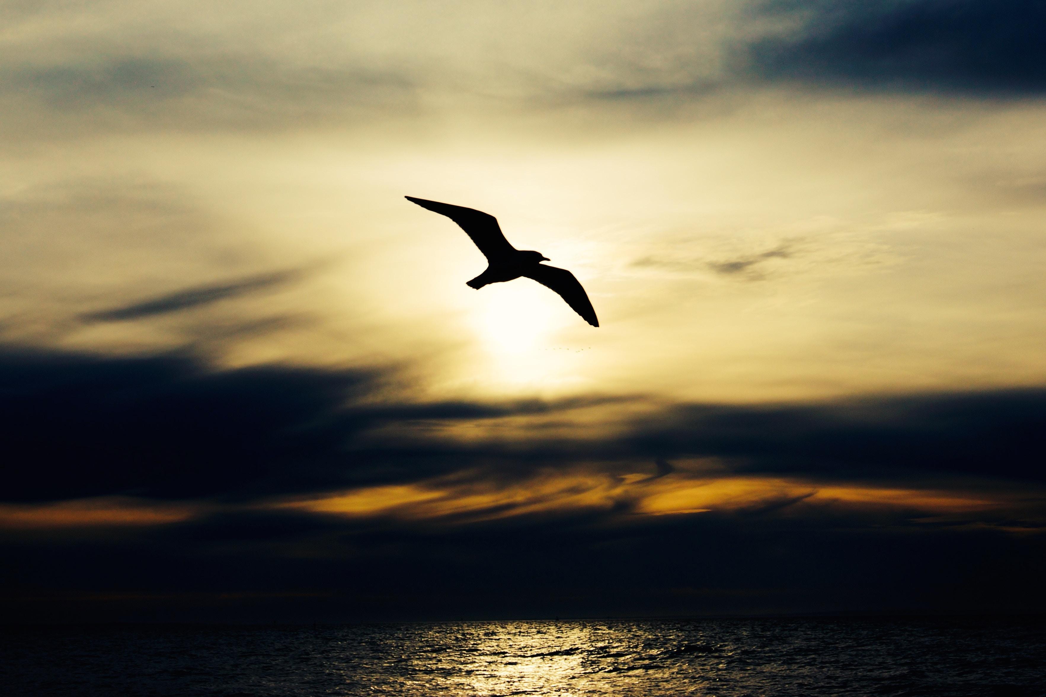 Unsplash-Alex Wigan