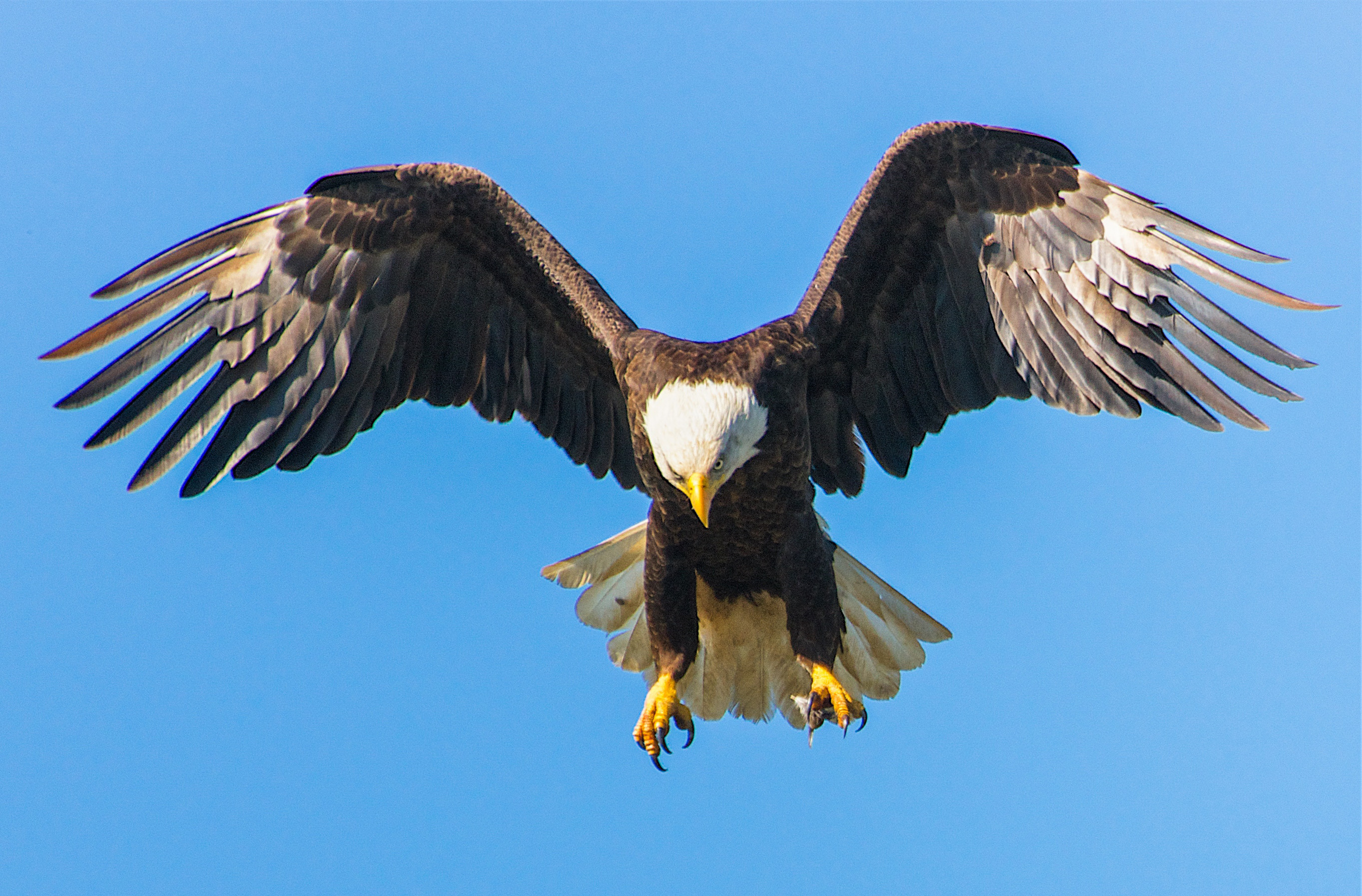 kiddie eagle